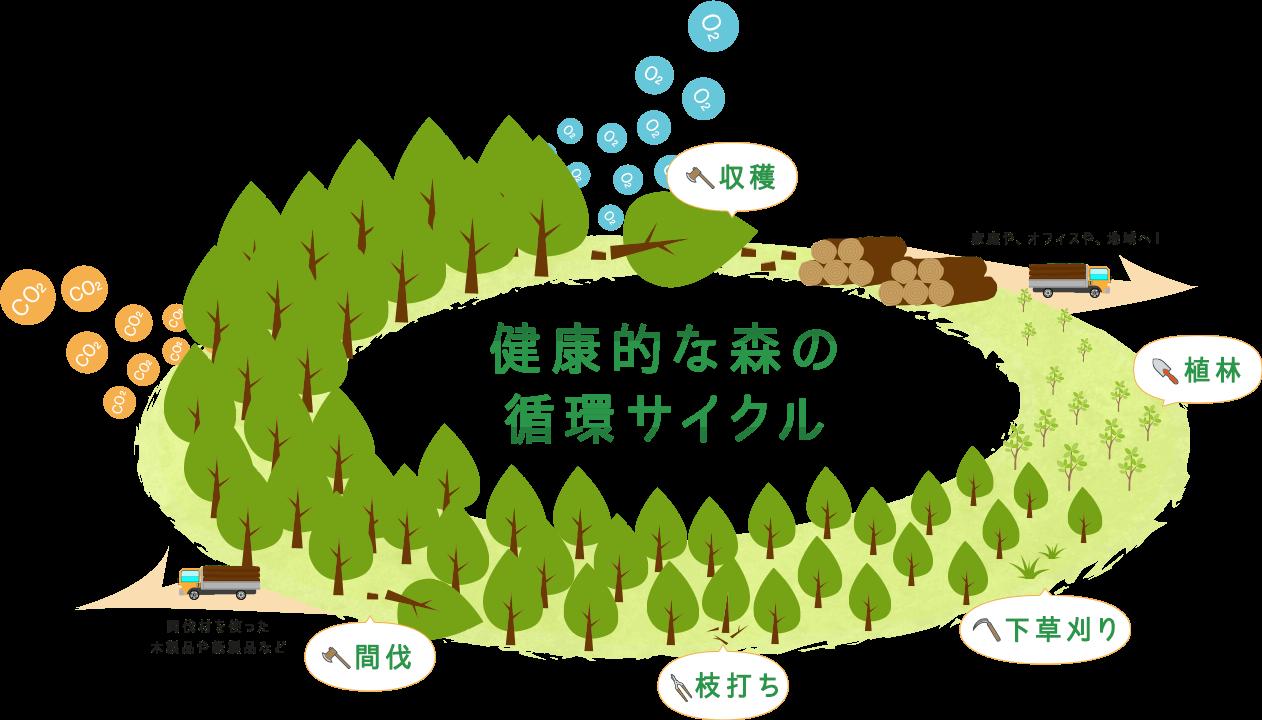 健康的な森の循環サイクル