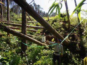 森林の再生